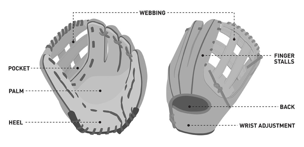 illustration showing different parts of a softball glove