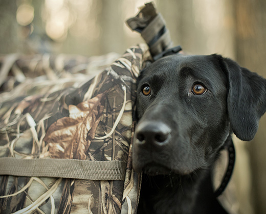 Waterfowl Blinds