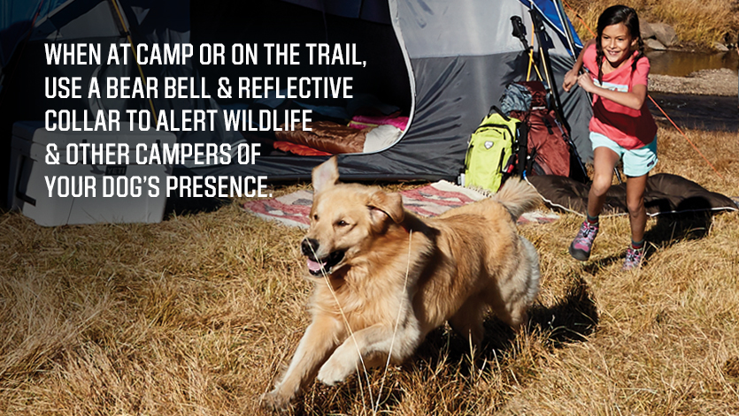 TIPS-FOR-CAMPING-WITH-YOUR-DOG-2